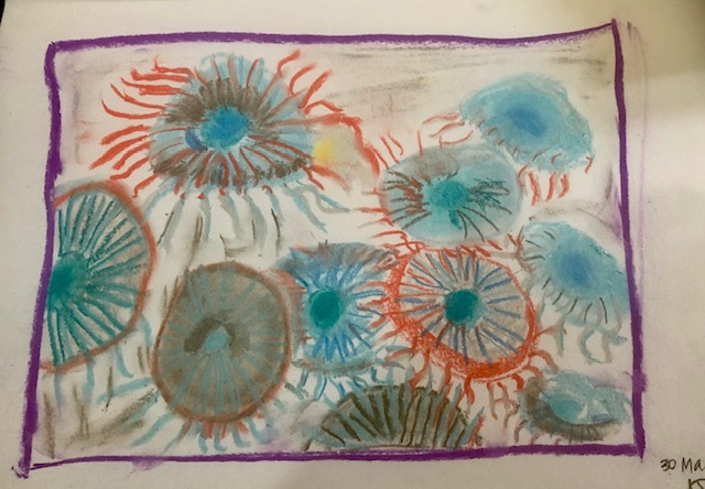 Kirsty L - Sea urchin drawing 2