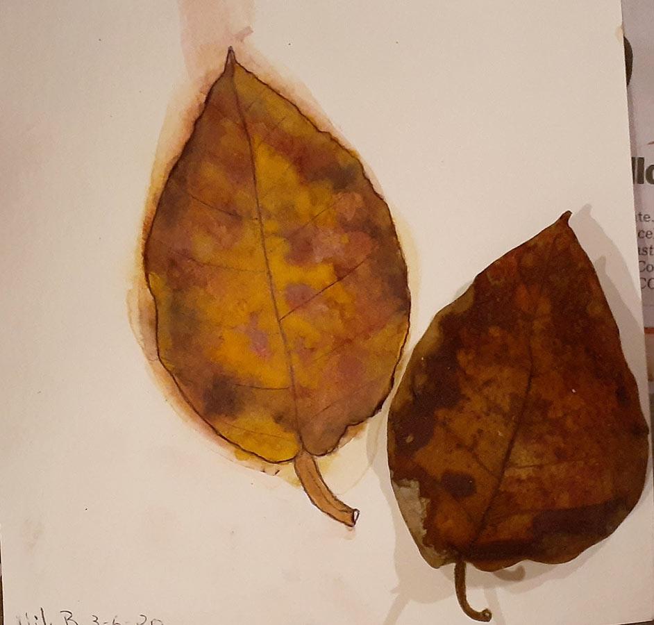 Nik - Leaf Watercolour