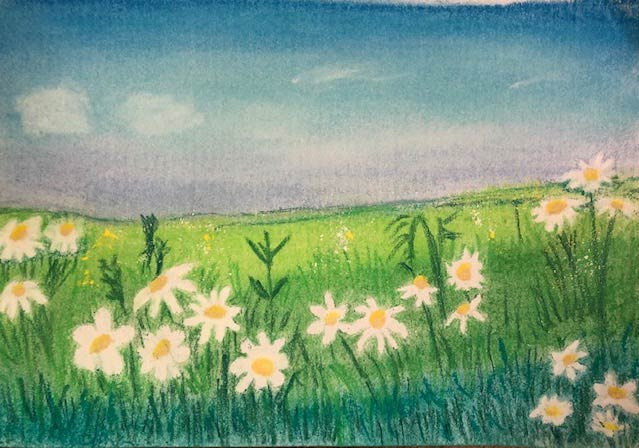 Kirsty L - Chamomile Flower study 2. Creative Welbeing Art Group - Recovery & Discovery Centre