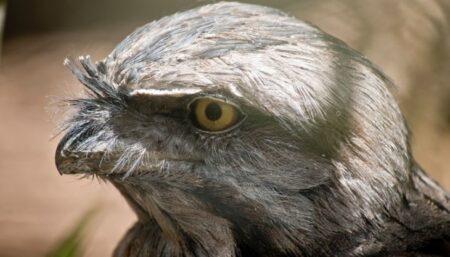 Powerful Owl workshops